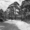 伊与田昌男撮影。国立東京療養所は、昭和14年(1939)に傷痍軍人東京療養所として開設。昭和20年(1945)に厚生省に移管され、国立東京療養所と改称した。結核治療と研究の中心的役割を果してきた。昭和37年(1962)、国立療養所清瀬病院と統合して国立療養所東京病院となった。平成16年(2004)、国立療養所は独立行政法人国立病院機構に移行。