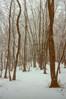 清瀬市内の雑木林に雪が降っている様子です。農作物を豊作にするために、雑木林から落ち葉を集めて堆肥にし使用していたので、雑木林は農業と切っても切れない関係でした。<br /> 写真から約30年経た現在でも市内には多くの雑木林が残ります。